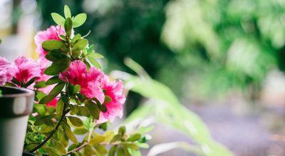 Lato wpełni, anabalkonie - ogród!